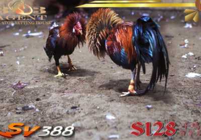 Situs Alternatif Sabung Ayam Online S128 Ternama