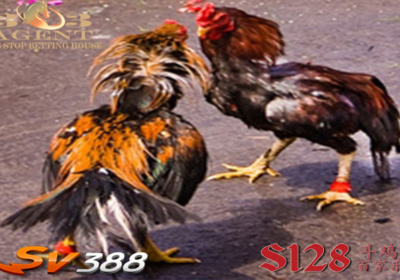Cara Daftar Sabung Ayam Online S1288 Teraman 2019